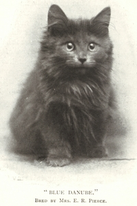 maincoon-history2