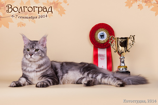 best male  best adult  best-of-breed 20141002 1722348603