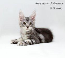 Назар,11,5  недель