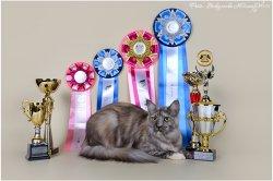 1 марта 2015, Воронеж, Best of Best II