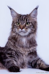 Оливия, 2 года