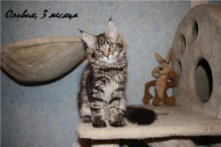 Оливия, 3 месяца