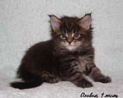 Оливия, 1 месяц