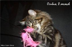 Оливия, 8 месяцев