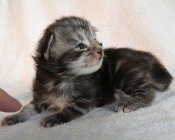 Cleo, 2 недели