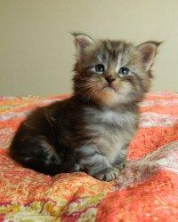 Cleo, 4 недели