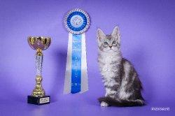 10 недель, лучший котенок противоположенного пола
