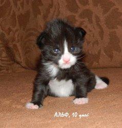 Alf, 10 дней