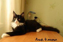 Alf, 4 месяца
