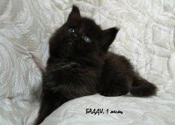 Buddy, 1 месяц