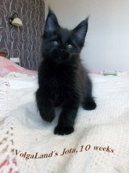10 недель