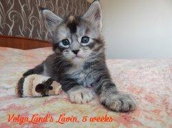 5 недель