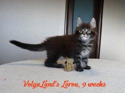 9 недель